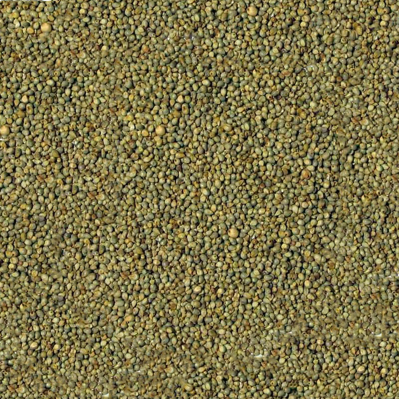 Bajra Manufacturer,Exporter,Supplier in India