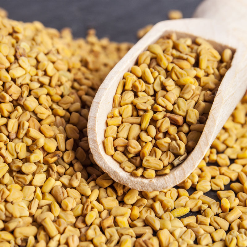 Fenugreek Seeds Manufacturer,Exporter,Supplier in India